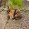 August 23, 2016 Bunnies on the Canal (22)