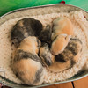 August 11, 2016 Meddlesome's One Week Old Kits (39)