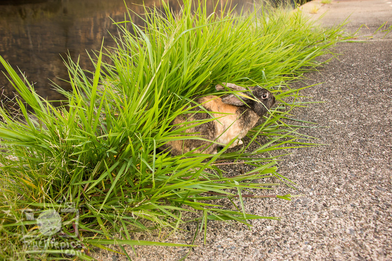 August 23, 2016 Bunnies on the Canal (35)