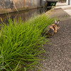 August 23, 2016 Bunnies on the Canal (14)