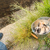 August 23, 2016 Bunnies on the Canal (1)