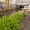 August 23, 2016 Bunnies on the Canal (15)