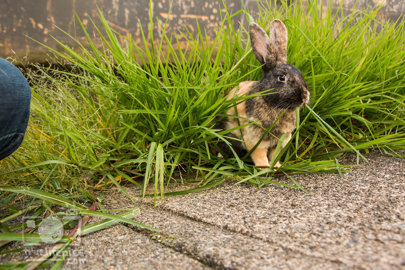 August 23, 2016 Bunnies on the Canal (32)