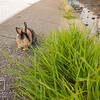 August 23, 2016 Bunnies on the Canal (13)