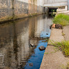 August 23, 2016 Bunnies on the Canal (17)