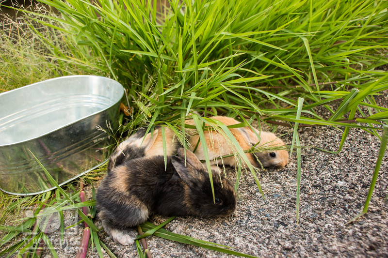 August 23, 2016 Bunnies on the Canal (3)