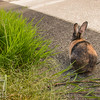 August 23, 2016 Bunnies on the Canal (12)