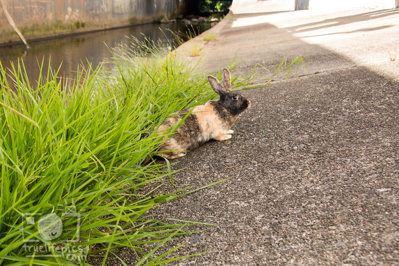August 23, 2016 Bunnies on the Canal (40)