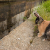 August 23, 2016 Bunnies on the Canal (21)