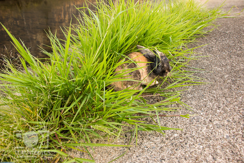 August 23, 2016 Bunnies on the Canal (34)