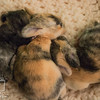August 11, 2016 Meddlesome's One Week Old Kits (34)