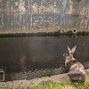 Mouse by the WorcShop Canal May 4, 2017 (17)