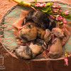 August 8, 2016 4 Day Old Bunnies(22)