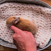 20160815 11 day old bunnies (75)