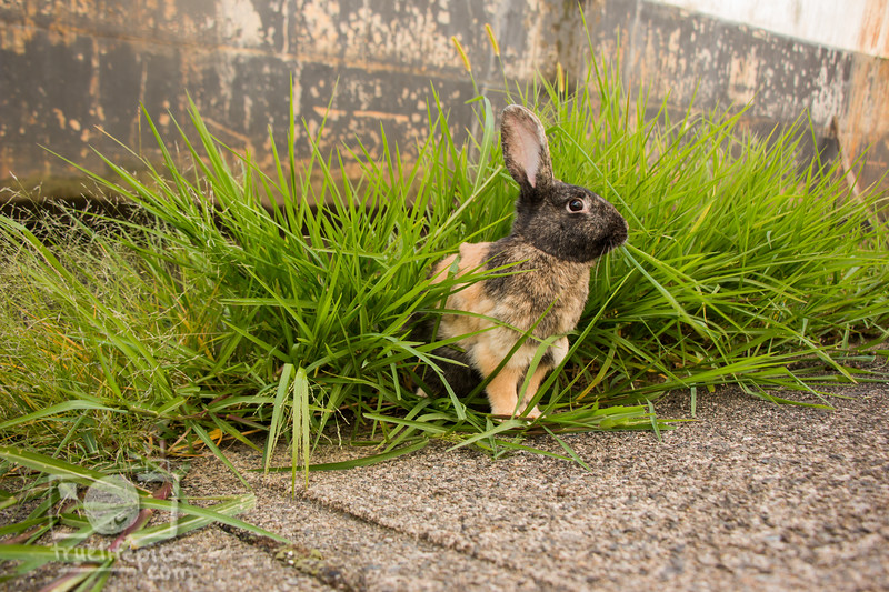August 23, 2016 Bunnies on the Canal (33)