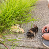 August 23, 2016 Bunnies on the Canal (4)