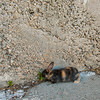September 11, 2016 Mouse out supervising (2)