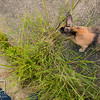 August 23, 2016 Bunnies on the Canal (16)