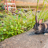 September 11, 2016 Mouse out supervising (8)