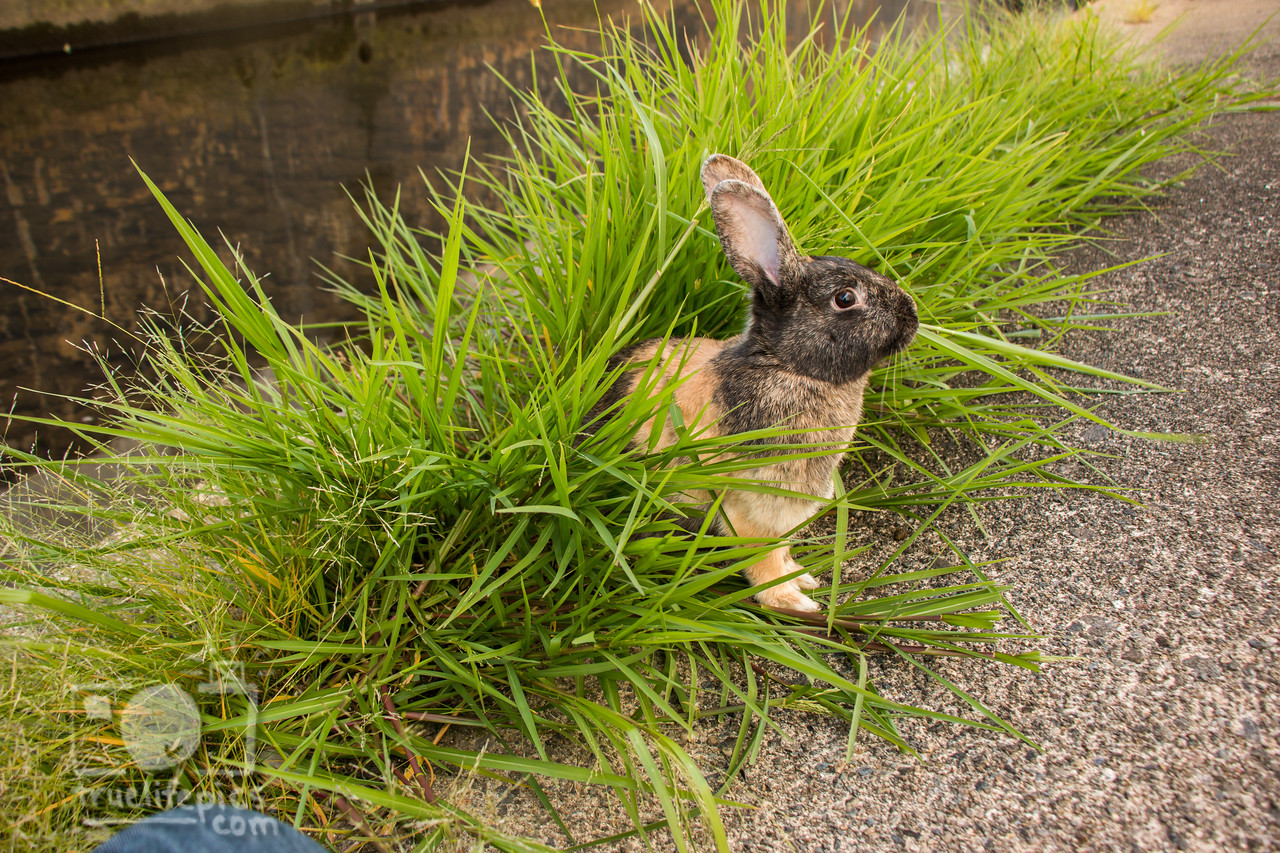 August 23, 2016 Bunnies on the Canal (30)