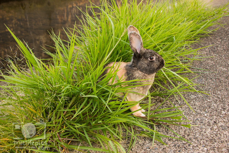 August 23, 2016 Bunnies on the Canal (31)