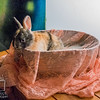 August 22, 2016 Bunny Kits (13)