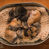 August 11, 2016 Meddlesome's One Week Old Kits (48)
