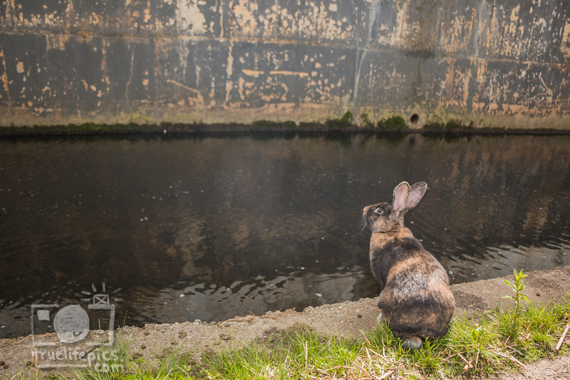 Mouse by the WorcShop Canal May 4, 2017 (16).jpg
