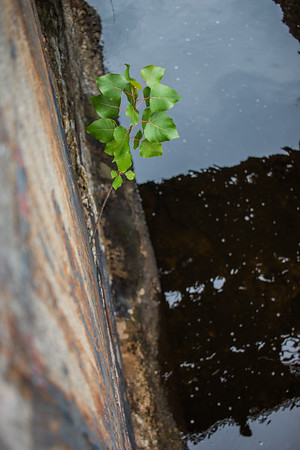 20180725 by the canal (2)