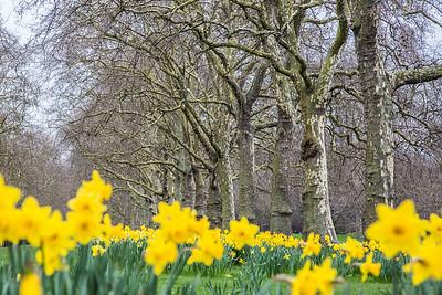 Spring in St. James park