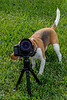 Teach Your Puppy Photography
