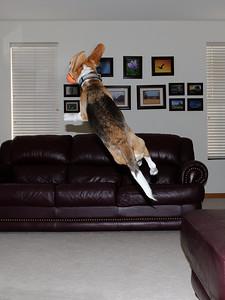 Super Dog 04 The Catch