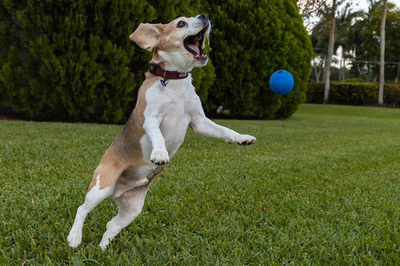 Ball Attack Brody