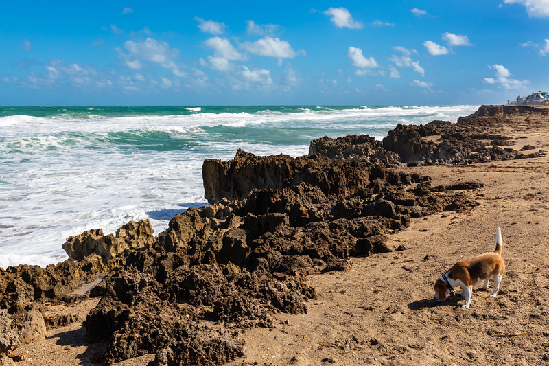 Beach Comber Brody-8051
