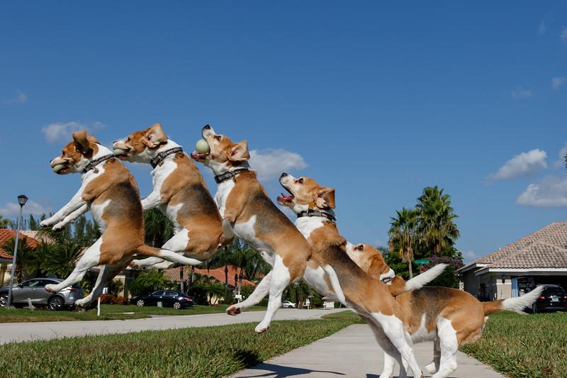Jumping Brody