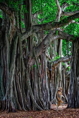 Tip Toe through the Cypress Grove-5207569