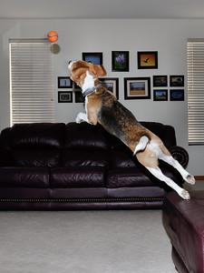 Super Dog 02 The Leap