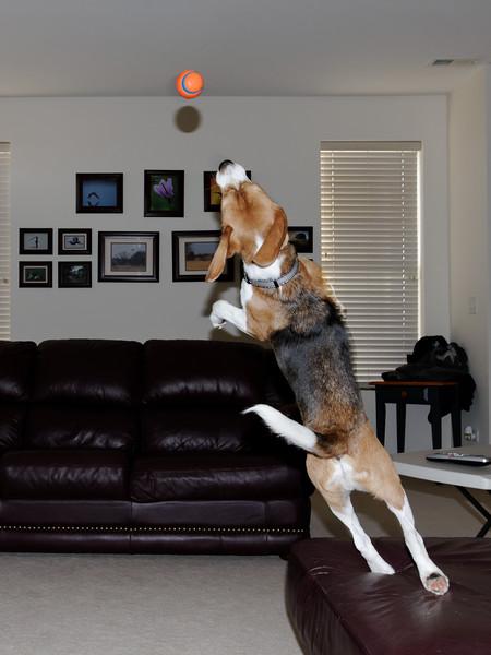 Super Dog 01 Take Off