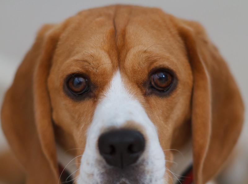Brody Portrait-8149.jpg