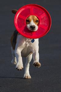 Frisbee Headress