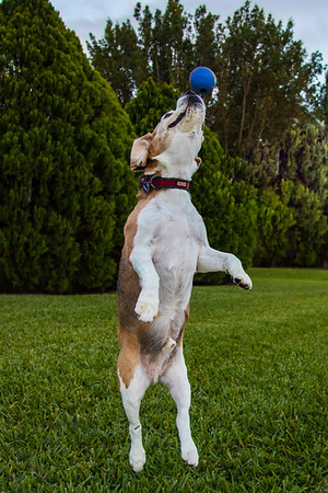 A Highball is the name for a family of mixed alcoholic drinks that are composed of an alcoholic base spirit and a larger proportion of a non-alcoholic mixer served in a tall glass.  . OR... BRODy IN FULL EXTENSION CATCHING HIS FAVORITE TOY.