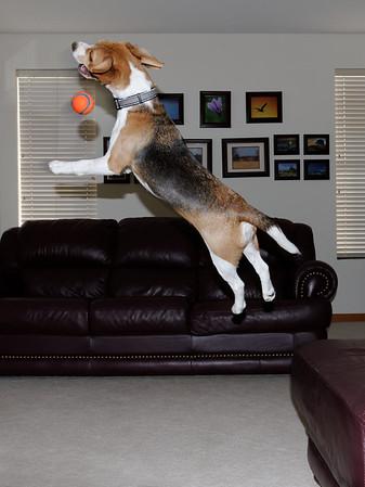 Super Dog 03 The Miss
