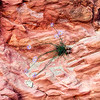 Flower on Rock, Little Wildhorse Canyon, Utah