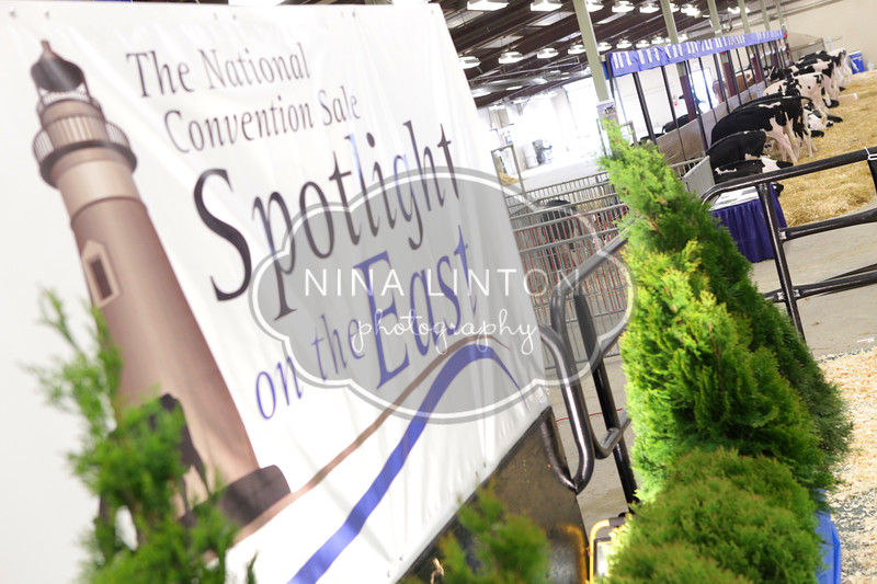 2011 National Holstein Convention Spotlight on the East Sale