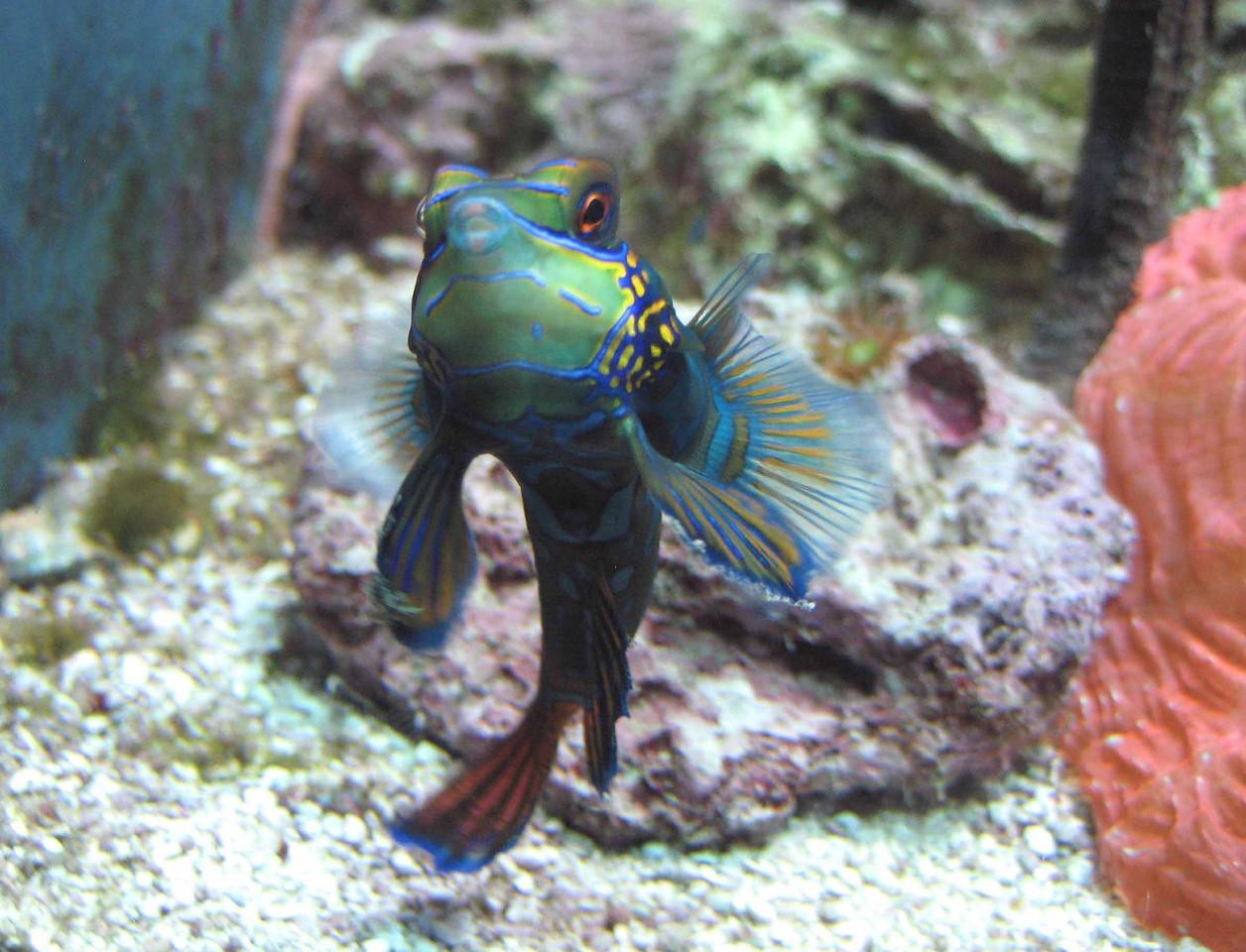 the purse of Nereid lips seemed to speak of sea treasures beyond this preserve...