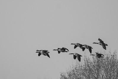 Landing at a Salt Marsh