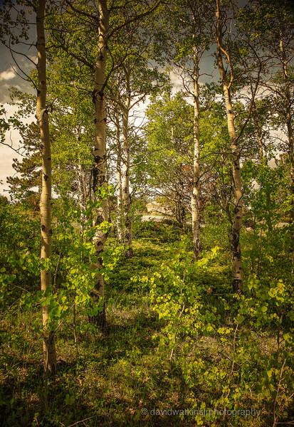 Toward the Great Meadow Acadia