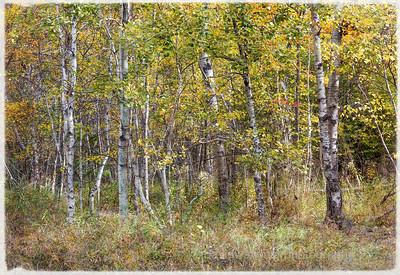 Acadia Fall No 5