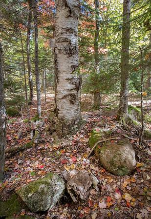 Acadia Fall No 8