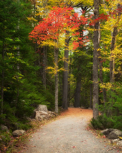 Carriage Road, Acadia National Park
